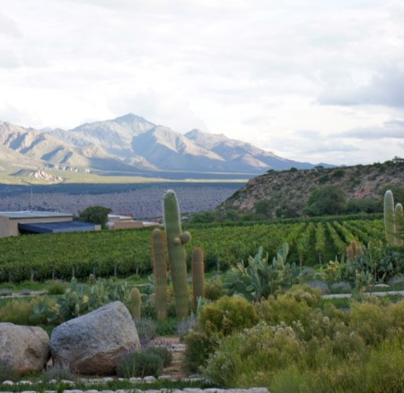 A VINEYARD ON TOP OF THE WORLD