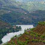 Douro Valley terraced vineyards