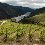 Douro Valley grapes on hill