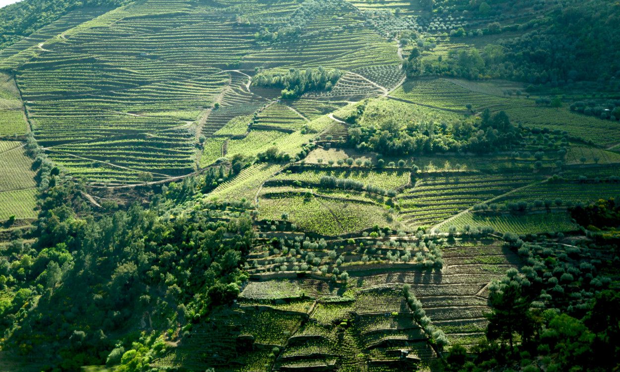Douro Valley terraced hills
