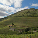 Douro Valley green hillside