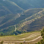 Douro Valley terraced slopes