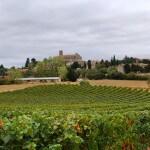 Camellas-Lloret Languedoc