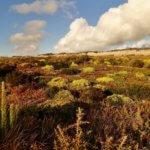 Areias do Seixo plants