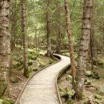 Aigüestortes i Estany de Sant Maurici National Park wood path