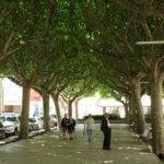 La Seu d'Urgell main square