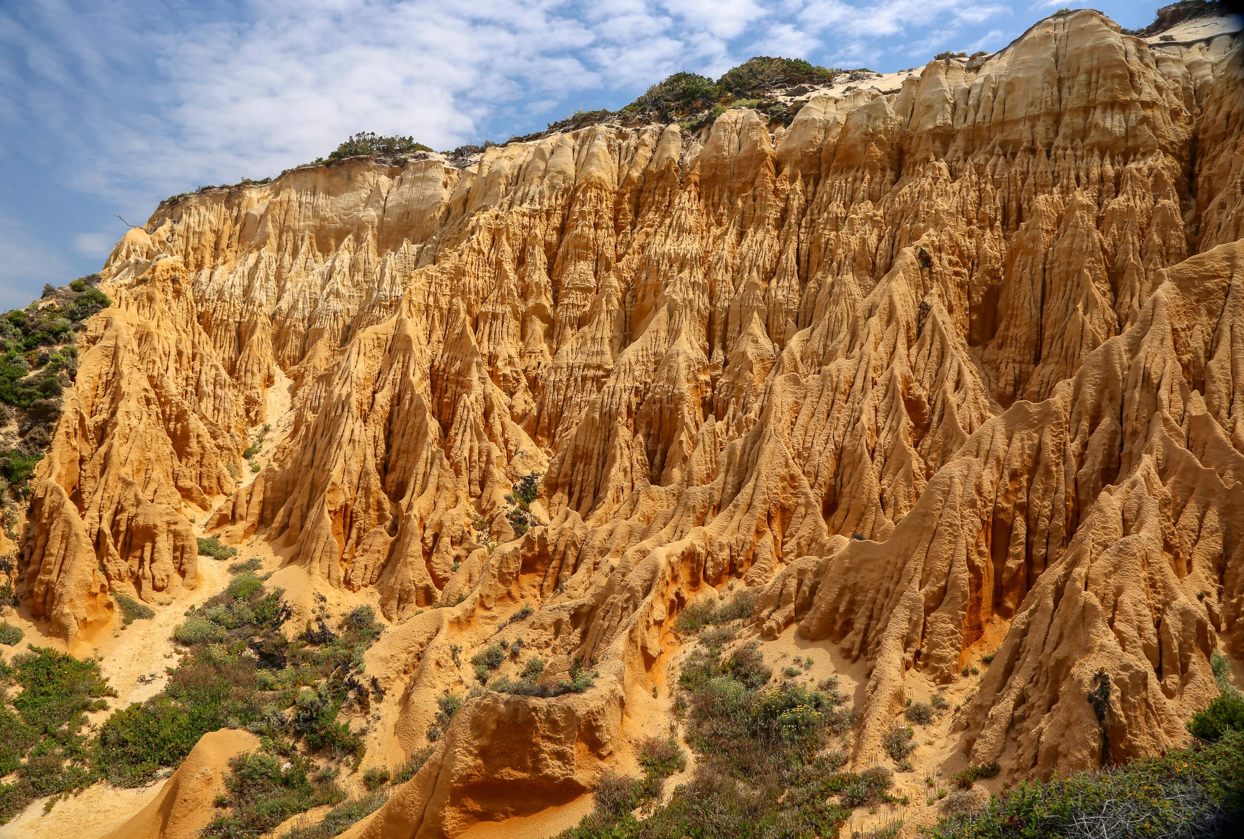 Fossil da Galé formation