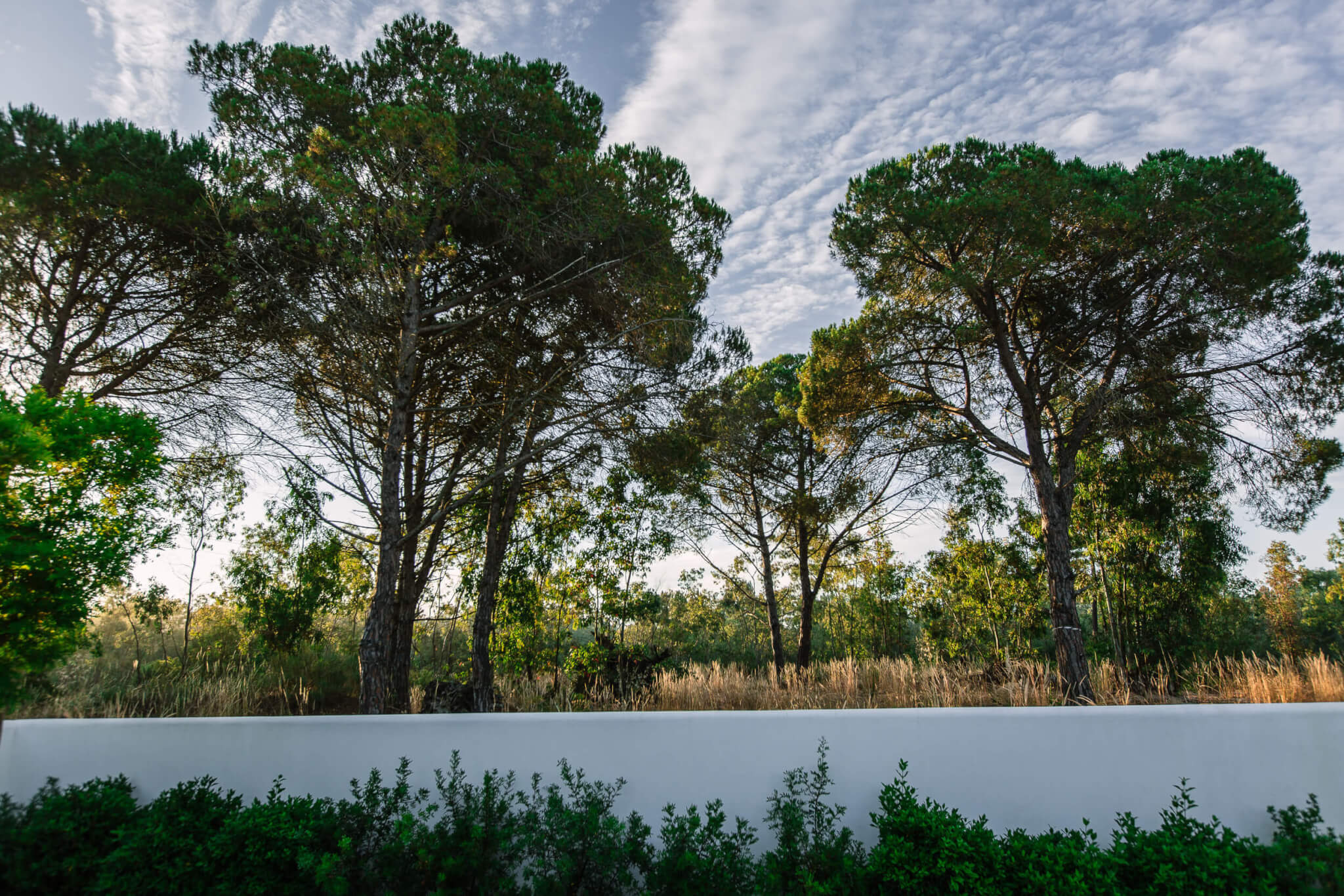 Brejos Villa Comporta trees