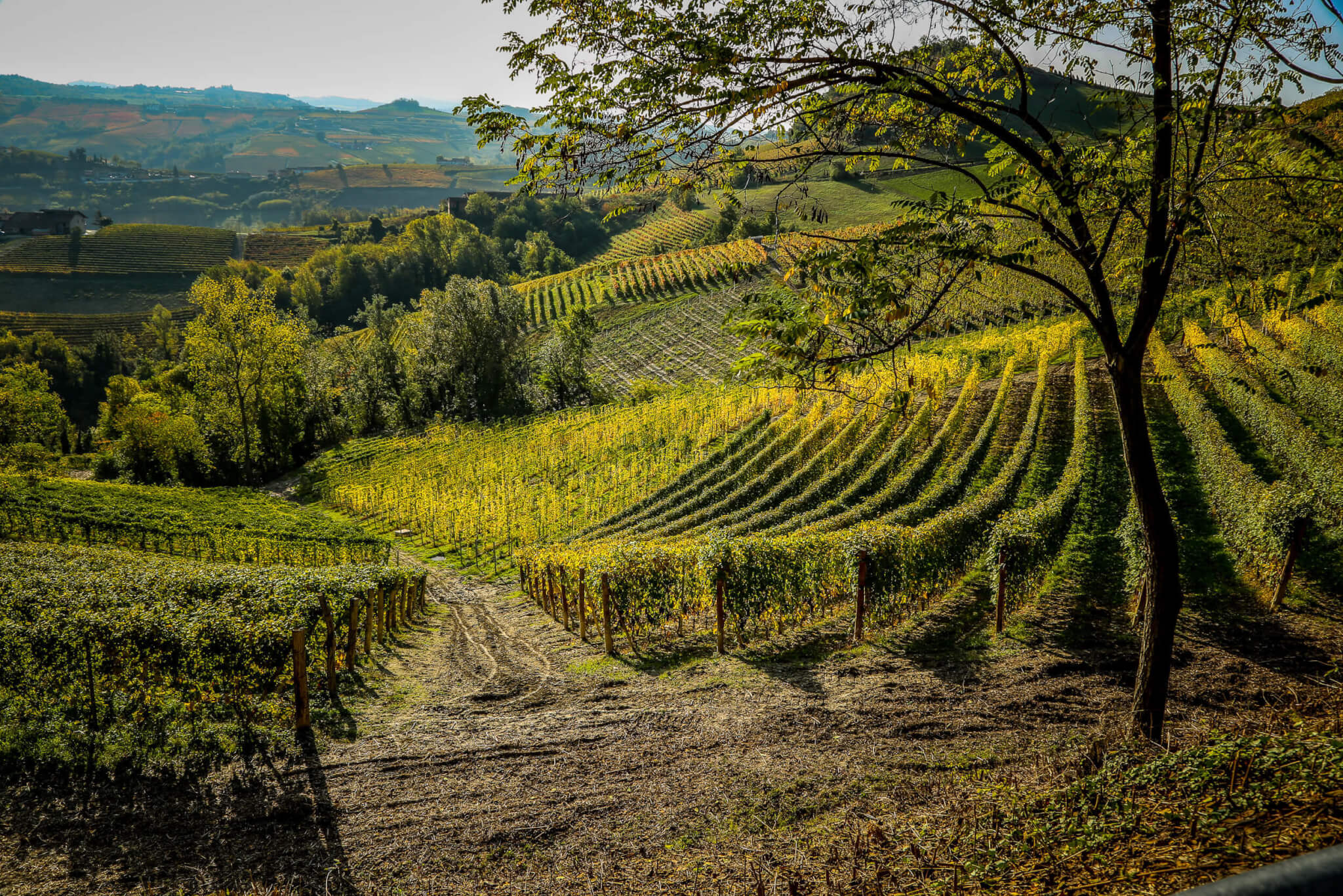 Vineyards along the Via Ginestra Barolo