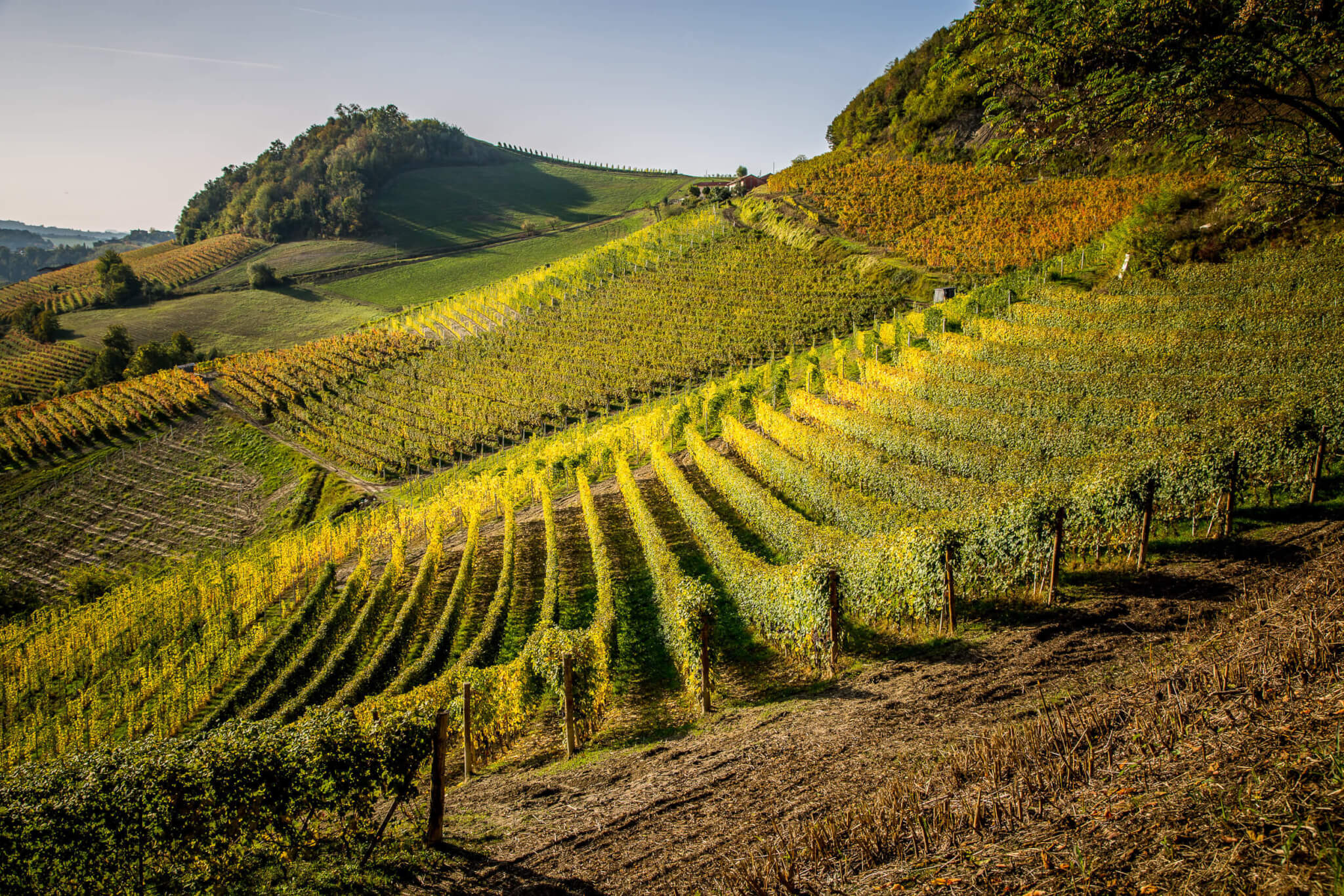 Elio Grasso vineyards in sun