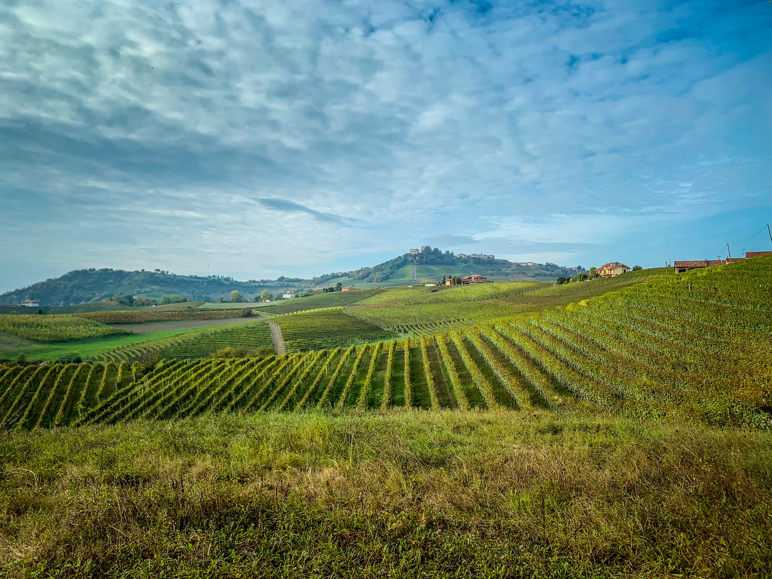 Simone Scaletta vineyard view