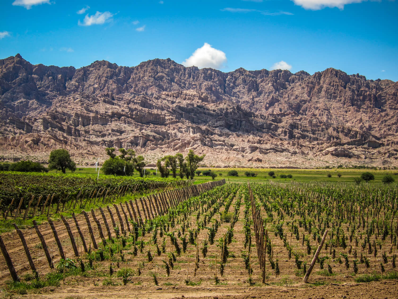 Gascon vineyard Salta