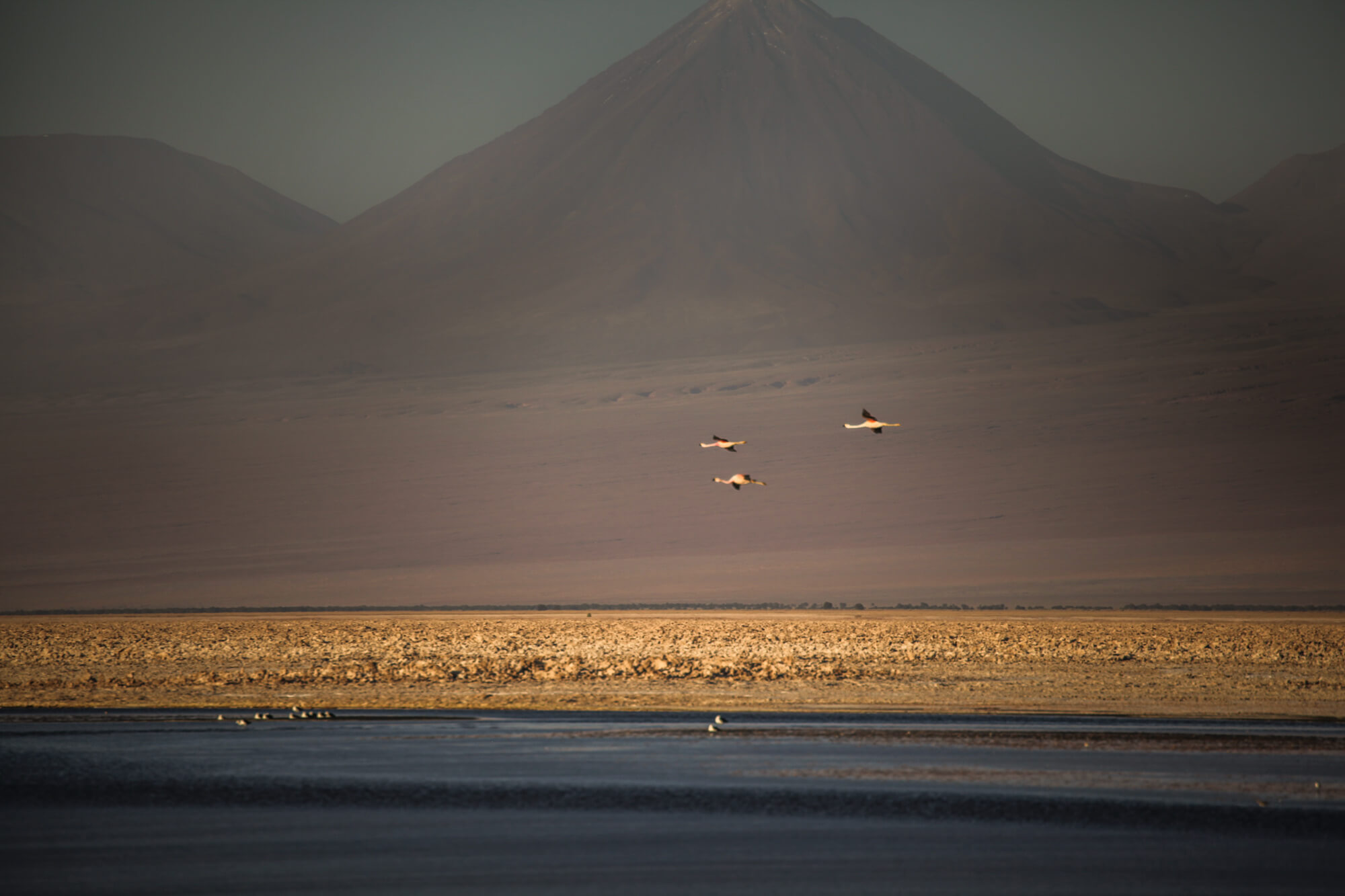 flamingos and volcanoes in Salar de Atacama